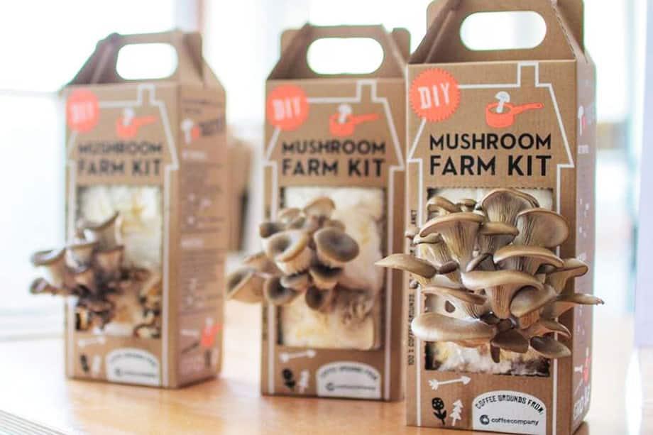 Mushroom_kit